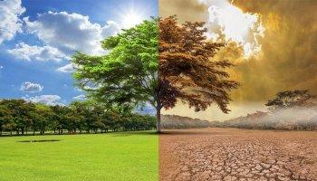 Dünyanın ortalama sıcaklığı 2100 yılına kadar 5-6 derece artabilir #1