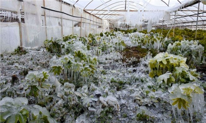 What is agricultural frost #2