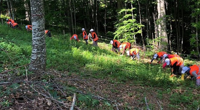 What is Silviculture #1