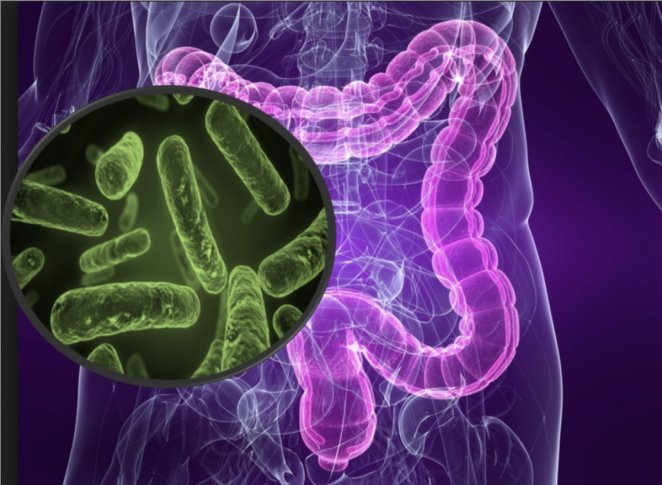 What is microbiota #2