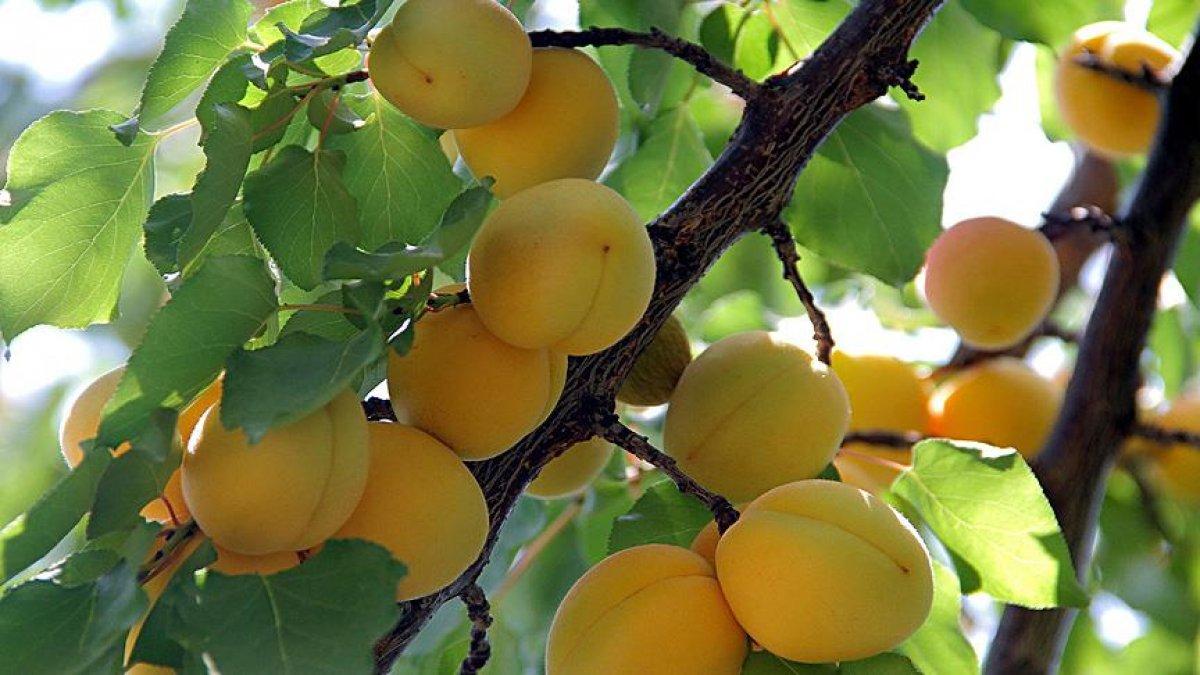renklerine gore meyve ve sebzelerin faydalari 1732