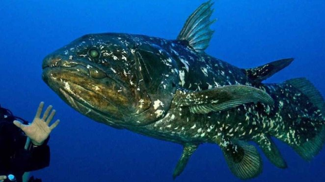Fish that can live up to 100 years: Coelacanth #1