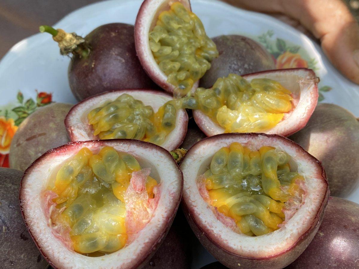 passiflora 8473