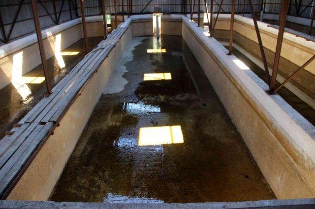 Sivas ta kuraklıktan balıklar susuz kaldı, 20 havuzdan 15'i kurudu #5