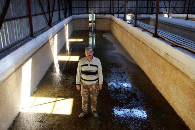 Sivas ta kuraklıktan balıklar susuz kaldı, 20 havuzdan 15'i kurudu #8