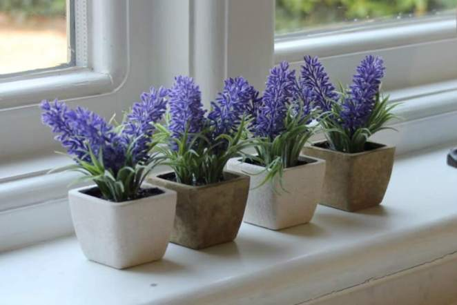 6 houseplants that will make any room in your home beautiful #6