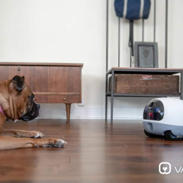 vava mobilepet camera mobile pet cam 00 dogcam
