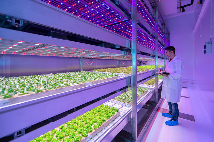 future of food vertical farming 6