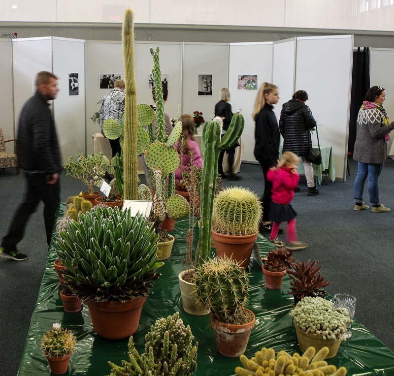 hveragerði succulents