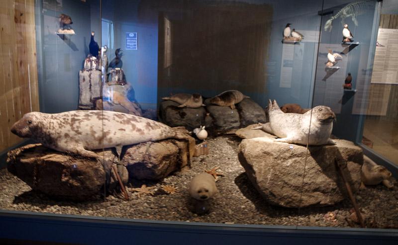 seal museum
