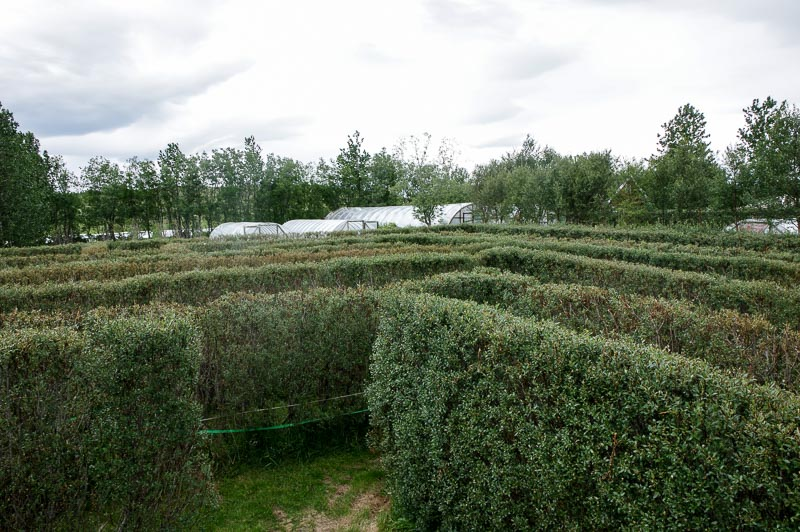 hedge maze overview