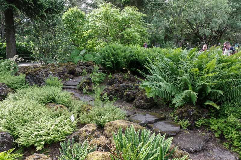 reykjavik botanical gardens path