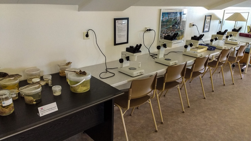 sudurnes science and learning microscopes