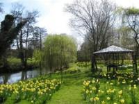 brockdish-gardens-2-560x420