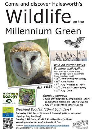 Halesworth-Millennium-Green-Summer-Science-Festival-1