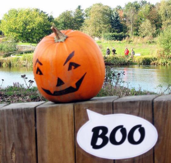 Natural Halloween Decorations: TRICK OR TWEET AT PENSTHORPE NATURAL PARK THIS HALLOWEEN