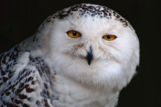 Suffolk Owl Sanctuary Christmas