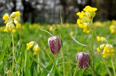 Raveningham Gardens Spring Flowers