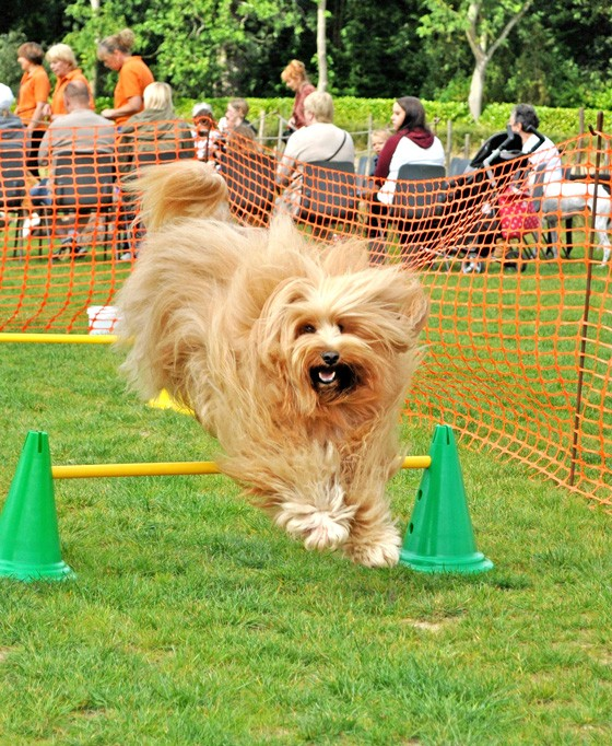 Fairhaven Dog Day