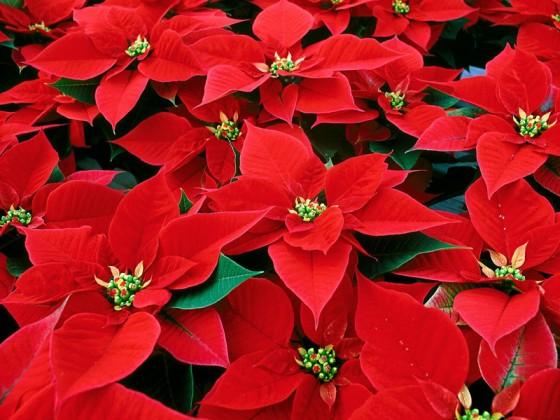 Bungay Flower Club December meeting