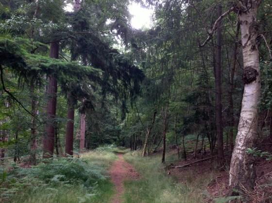 dunwich woods