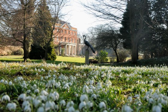 Raveningham Gardens opens for the snowdrop season