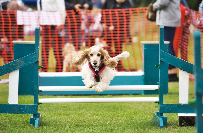 Tenth Annual Fairhaven Garden Fun Dog Day