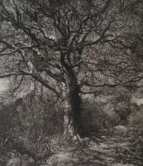 Hearts of Oak by Martin Mitchell Credit Martin Mitchell