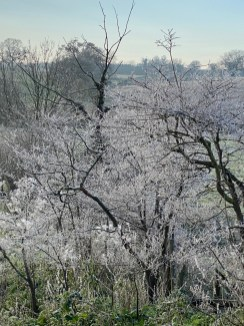 A Beautiful Frosty Day in December 2020