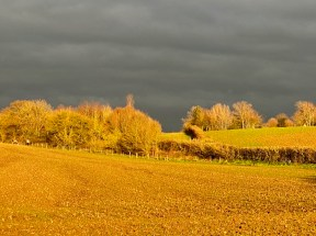 January 2021 Late winter sun in the waveney valley - 6