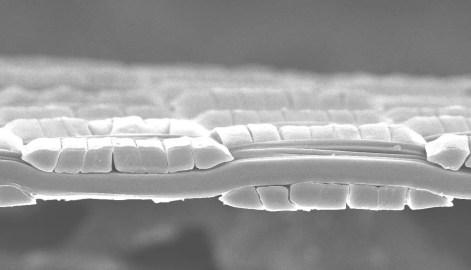 Pertex_CS10_Microscopic Image