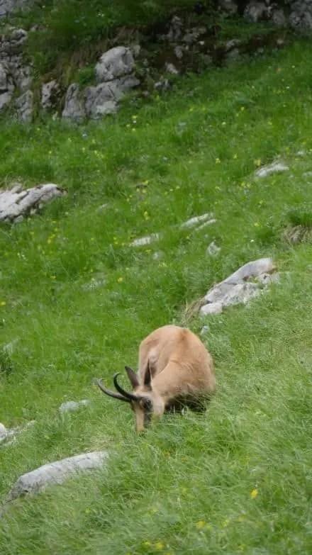 40 Jahre Nationalpark Berchtesgaden 34