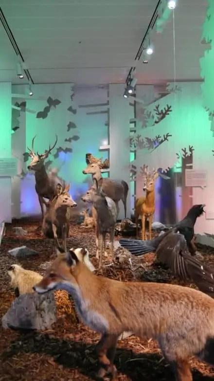 40 Jahre Nationalpark Berchtesgaden 38
