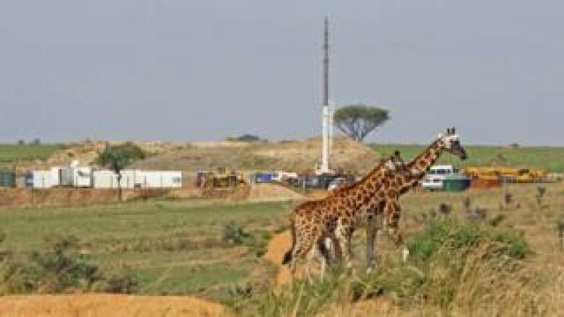 Giraffes and oil rigs in Uganda