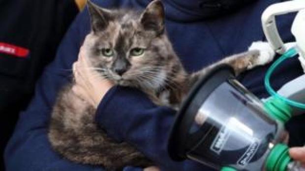 Harriet the cat