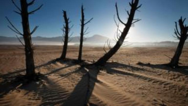 Bare sand and dried tree trunks standing out at Theewaterskloof Dam, near Villiersdorp, about 108km from Cape Town
