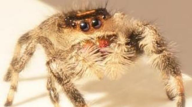 Kim the spider
