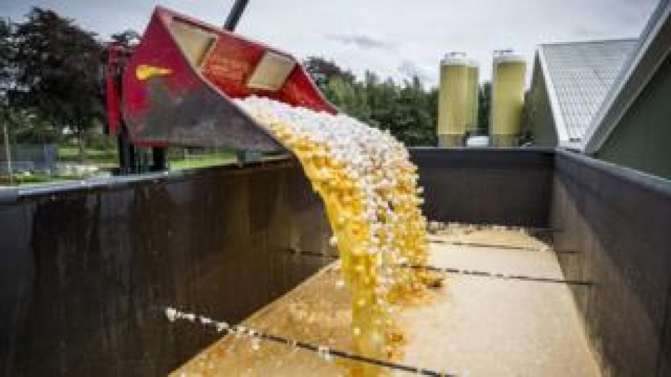 Eggs being destroyed at a poultry farm in Onstwedde, the Netherlands, 03 August 2017
