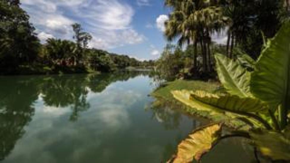 A view of the botanical gardens surrounding Inhotim