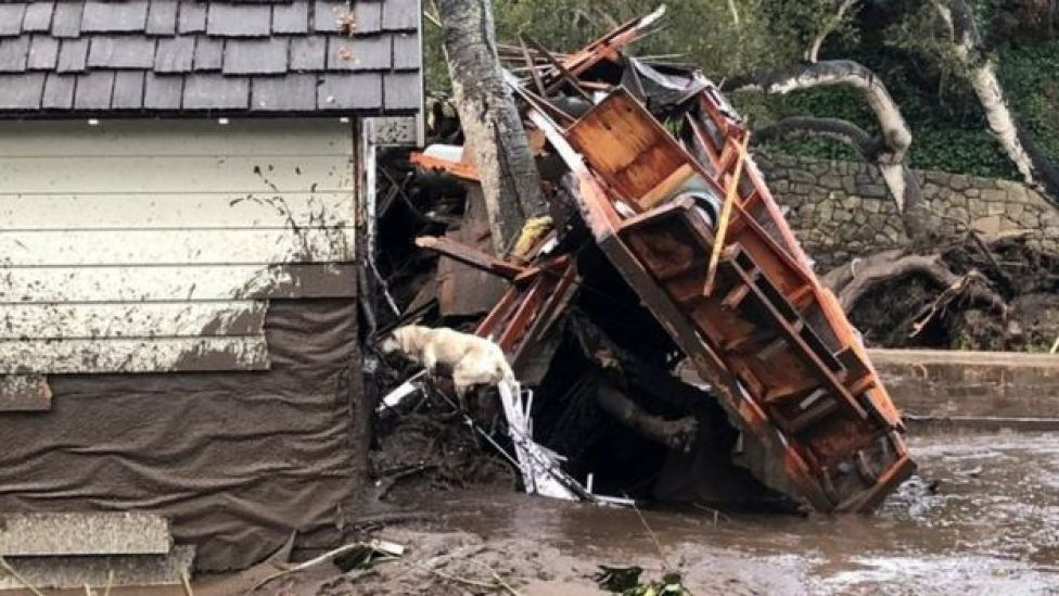A search dog looks for victims in damaged homes after a mudslide in Montecito, California.