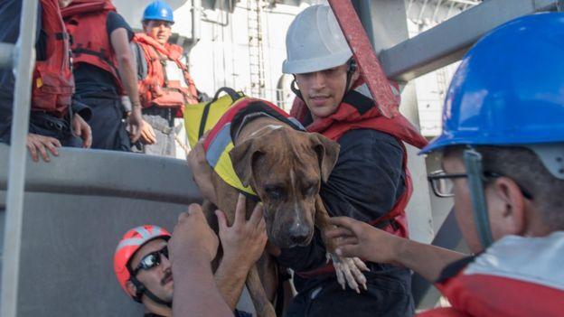 Duas velejadoras americanas resgatadas pela Marinha dos Estados Unidos após cerca de cinco meses no mar