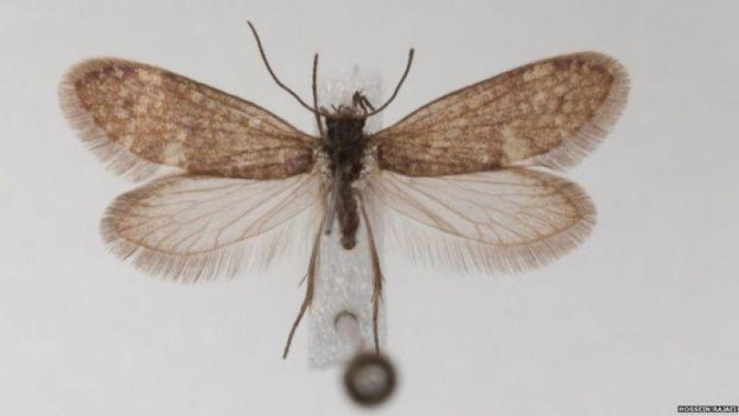 Imagem mostra mariposa viva