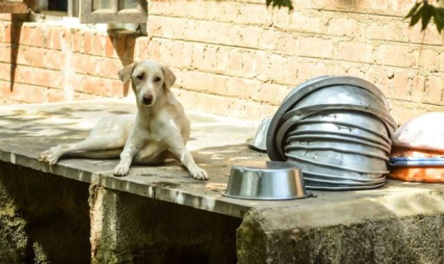 Un perro en la granja