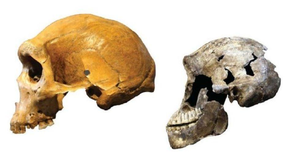 H. naledi (derecha) y hombre de Kabwe (izquierda)