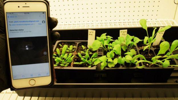 Plant detection