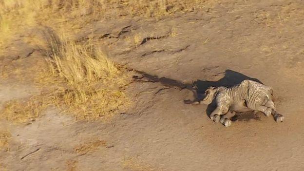 A dead elephant