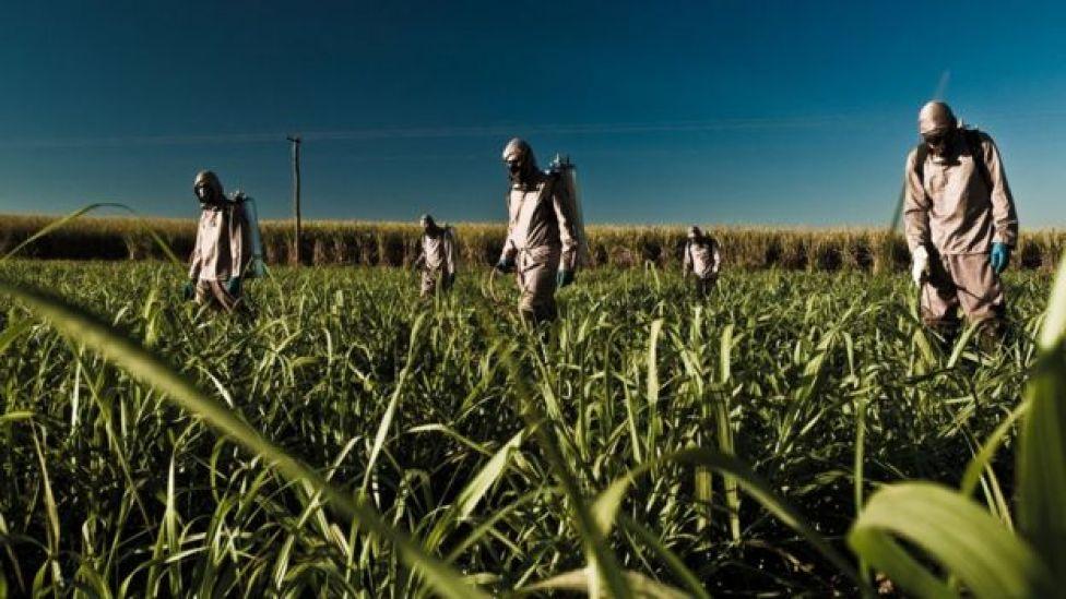 Aplicação de pesticida em plantação de cana-de-açúcar em Minas Gerais