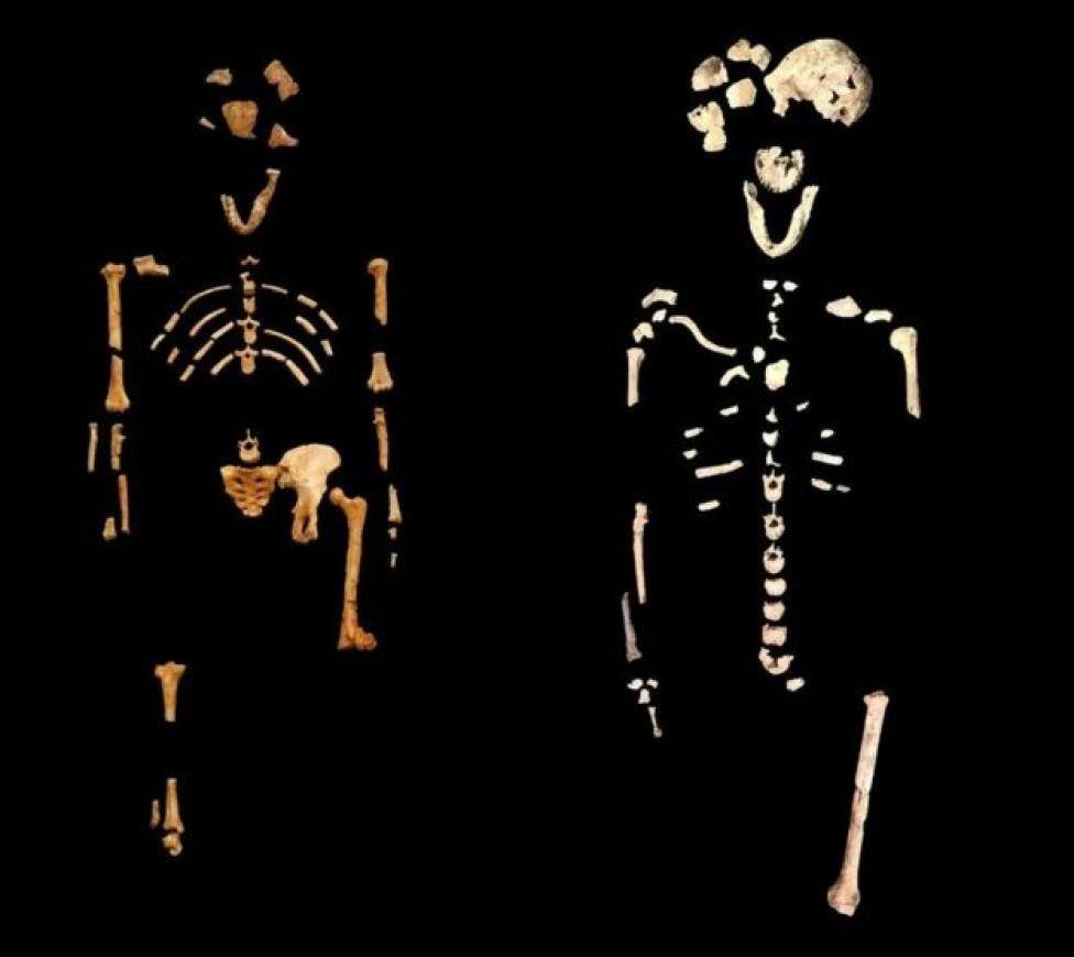 Esqueleto de Neo (derecha) y esqueleto de Lucy de Etiopía (izquierda).