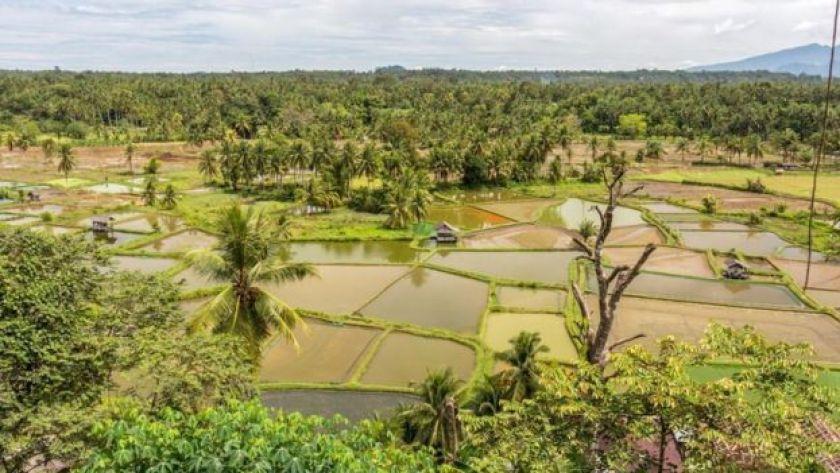 Batı Sumatra çeltik tarlaları