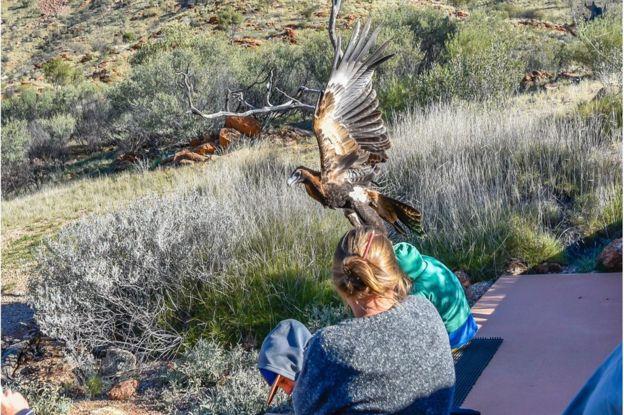 Eagle attacks boy